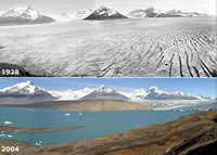 Upsala Glacier in Southern Argentina has melted at a rate of 200 meters per year.